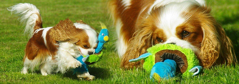 Hundeudstyr engros - Køb hundeudstyr engros hos dansk grossist