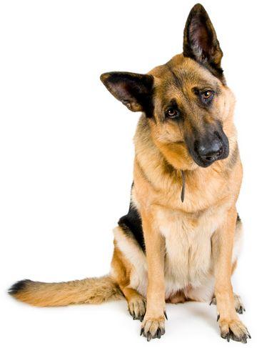 hundeudstyr engros